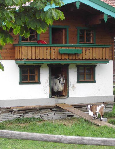Ziegenhaus
